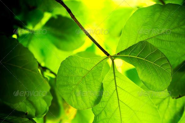 Plant Background - Stock Photo - Images
