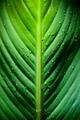 Dramatic Leaf Detail - PhotoDune Item for Sale