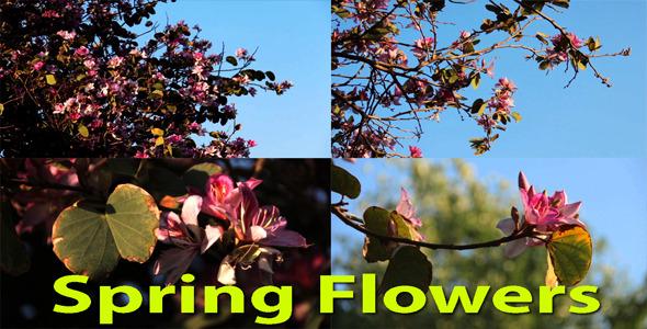 Spring Flowers Pack