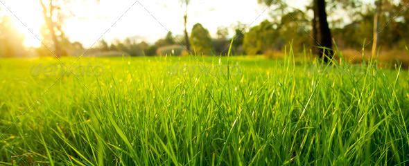 PhotoDune Lush Grass 551787