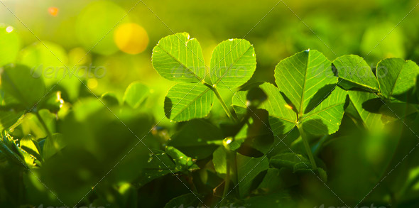 Greenery - Stock Photo - Images