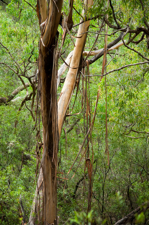 Forest Canopy - Stock Photo - Images