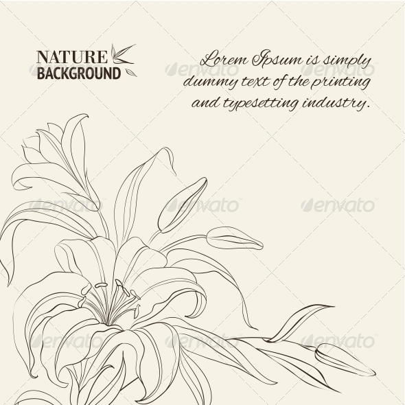 GraphicRiver Lily Flower Isolated Over White 4639529