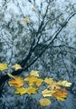 Autumn leaves in water - PhotoDune Item for Sale
