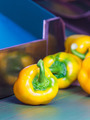 Yellow bell peppers on a conveyor belt - PhotoDune Item for Sale