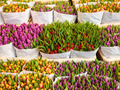 Assortment of colorful tulips in a flower shop - PhotoDune Item for Sale