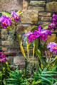purple orchids with cultured stone background - PhotoDune Item for Sale