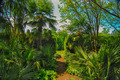 Tropical forest, palm trees during day sunlight - PhotoDune Item for Sale