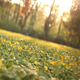 Sliding Around Flowers - VideoHive Item for Sale