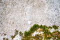 Green moss on a stone wall background - PhotoDune Item for Sale