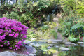 Azaleas Blooming by Waterfall - PhotoDune Item for Sale