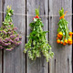three medical herbs bunch on old wooden wall - PhotoDune Item for Sale