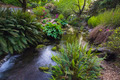 Stream at Crystal Springs Rhododendron Garden - PhotoDune Item for Sale