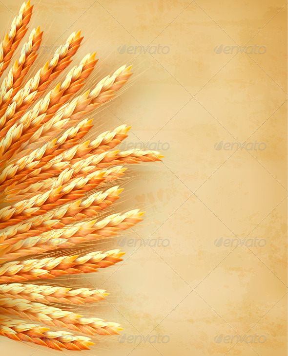 Ears of Wheat on Old Paper Background