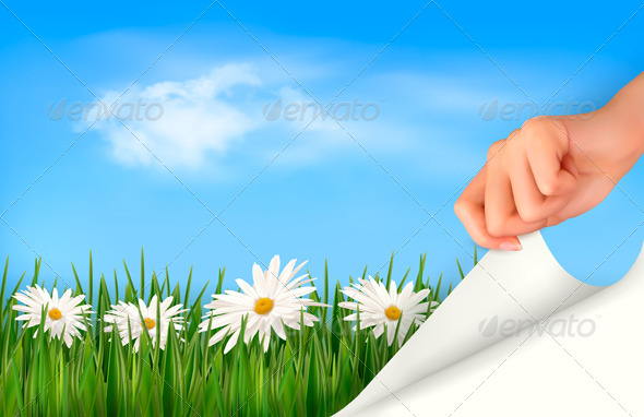 Nature Background with Green Grass Daisies
