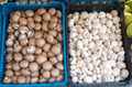 Brown and white champignons - PhotoDune Item for Sale