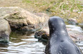 Seal looking away - PhotoDune Item for Sale
