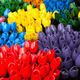 Colourful Tulips of Amsterdam Flower Market - PhotoDune Item for Sale