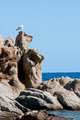 Seagull and rocks - PhotoDune Item for Sale