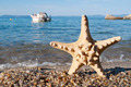 Starfish and motorboat - PhotoDune Item for Sale