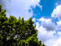 Dramatic cloudy sky and tree - PhotoDune Item for Sale