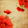 Vintage Composition With Poppies - PhotoDune Item for Sale