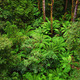 famous australian Rainforest - PhotoDune Item for Sale