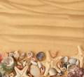 sea shells and sand. Background - PhotoDune Item for Sale