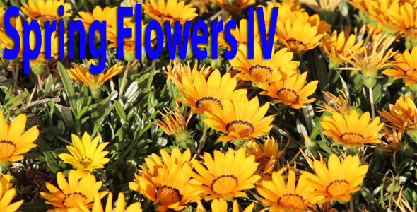 Spring Flowers IV