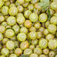 Green gooseberry background - PhotoDune Item for Sale
