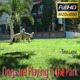 Dogs Are Playing in the Park - VideoHive Item for Sale