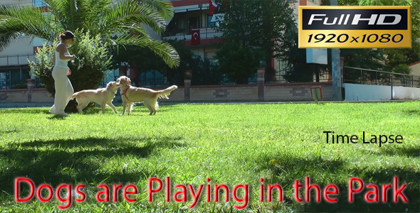 Dogs Are Playing in the Park