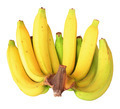 Bunch of bananas isolated on white background - PhotoDune Item for Sale
