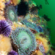 Anemones on reef - PhotoDune Item for Sale