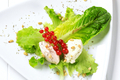 Cheese spread on lettuce leaves - PhotoDune Item for Sale
