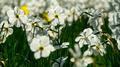 Flowers 27 - PhotoDune Item for Sale
