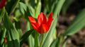 Flowers 22 - PhotoDune Item for Sale