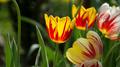 Flowers 14 - PhotoDune Item for Sale