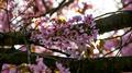 Flowers 33 - PhotoDune Item for Sale