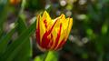 Flowers 11 - PhotoDune Item for Sale