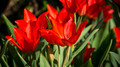 Flowers 21 - PhotoDune Item for Sale