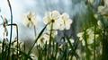 Flowers 28 - PhotoDune Item for Sale