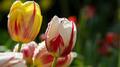 Flowers 09 - PhotoDune Item for Sale
