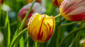 Flowers 03 - PhotoDune Item for Sale