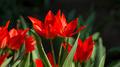 Flowers 23 - PhotoDune Item for Sale