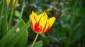 Flowers 20 - PhotoDune Item for Sale