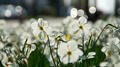 Flowers 29 - PhotoDune Item for Sale