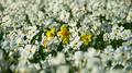 Flowers 26 - PhotoDune Item for Sale