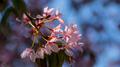 Flowers 34 - PhotoDune Item for Sale