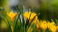 Flowers 36 - PhotoDune Item for Sale
